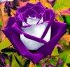 396f0ad4ce00e0ccf1ffead17da426c1--purple-things-purple-stuff.jpg