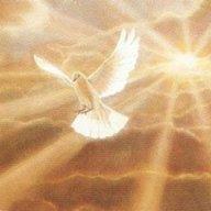 Scripture Bird