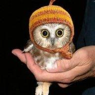 Blinky Owl